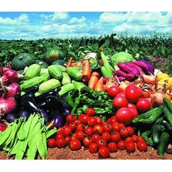蔬菜配送_西安蔬菜配送公司(在线咨询)_渭南蔬菜配送多少钱图片