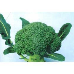 西安蔬菜配送公司(图)_蓝田蔬菜配送哪家专业_蔬菜配送图片
