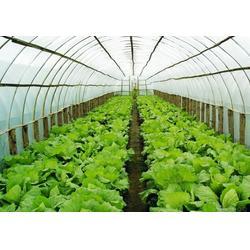 周至蔬菜配送電話、蔬菜配送、西安蔬菜配送公司(圖)圖片
