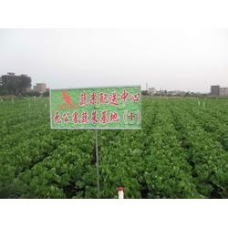 蔬菜配送-西安蔬菜配送公司-西安蔬菜配送公司(优质商家)图片