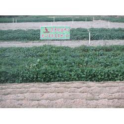 蔬菜配送|西安蔬菜配送公司|西安蔬菜配送厂家图片