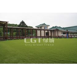 人造草施工、人造草、CGT绿城图片