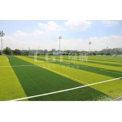 草坪,CGT绿城,运动草坪图片
