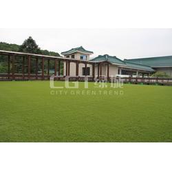 CGT绿城|人造草坪每平米需要多少钱|人造草坪