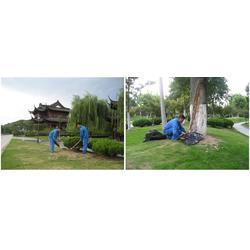 安陆白蚁防治、堤坝白蚁防治、武汉拜斯特(认证商家)图片