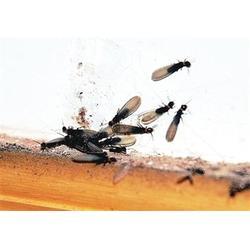 白蚁防治-武汉山庄白蚁防治-武汉树木白蚁防治(优质商家)图片