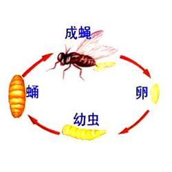 江岸区杀蚊蝇,武汉拜斯特杀蚊蝇,消杀蚊蝇用药图片