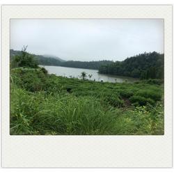永敢农家乐热情服务(图)_磐安旅游地图_磐安旅游图片