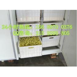 小型全自动豆芽机生产线_兴平豆芽机生产线_全自动豆芽机怎么样图片