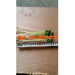 自动芽苗菜机价格_从化芽苗菜机_联浩多功能豆芽机器图片图片