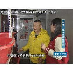 军辉养蝎子,郑州蝎子种苗 蝎子养殖技术推广图片