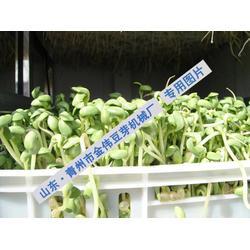 金伟大型豆芽机 中型豆芽机-豆芽机图片