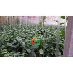 聊城甜椒苗哪里的好,甜椒苗,蔬菜种苗(查看)图片