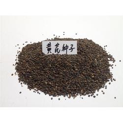 黄芪种子、天津黄芪种子、安国市元泰种子经营部(查看)图片