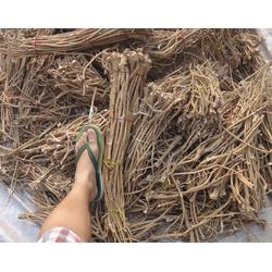 黄芪种子收获_天津黄芪种子_安国市元泰种子经营部(查看)图片