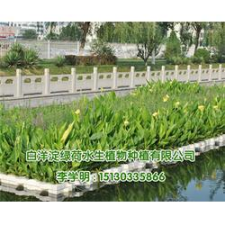 人工生态浮床-生态浮岛-绿荷水生植物基地(查看)图片