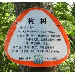 天台杂交构树 陌上源林 杂交构树价值图片