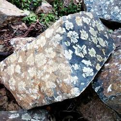 郑州牡丹石哪里有|振飞牡丹石天然奇石(已认证)|牡丹石图片