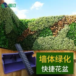 朗汀立体绿化 植物墙快捷花盆 垂直墙体绿化服务商图片