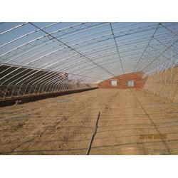 绿大地温室园艺(图)|智能温室大棚工程|青岛智能温室图片