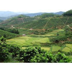 鹏瑞农业开发(图)|脐橙销售|玉林脐橙图片