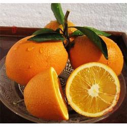 脐橙、江苏脐橙、鹏瑞农业开发图片