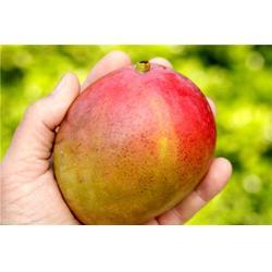鹏瑞农业开发、芒果厂商、安阳芒果图片