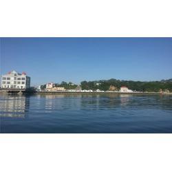 威海鮮海參養殖基地、德明公司、鮮海參圖片