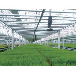 玻璃温室销售|诸城玻璃温室|宇瑞温室工程(查看)图片