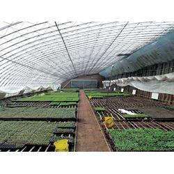 日光温室供应-宇瑞温室工程(在线咨询)日光温室图片
