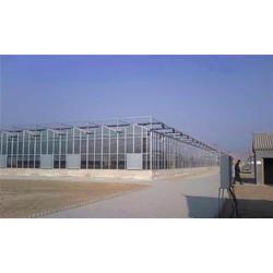 玻璃温室报价-坊子玻璃温室-宇瑞温室工程(查看)图片