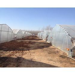 腾达农业,单栋拱棚建设,单栋拱棚图片