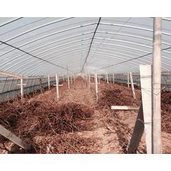 春秋拱棚厂家、衡水春秋拱棚、腾达农业图片