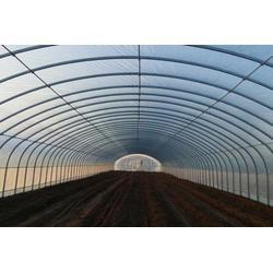 几字钢日光温室造价_腾达农业(在线咨询)_几字钢日光温室图片