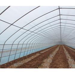 钢架农用大棚,腾达农业(在线咨询),农用大棚图片
