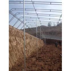腾达农业技术(图)、建设土坑温室、承德土坑温室图片
