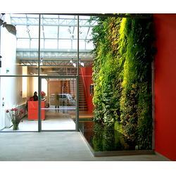 假植物墙、众诚仿真植物(在线咨询)、植物墙图片