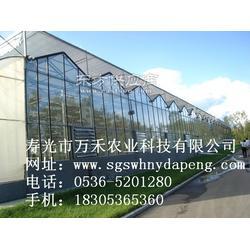 温室大棚大棚建设-寿光市万禾农业图片