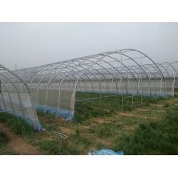 日光温室设计,焦作日光温室,新农温室(查看)图片
