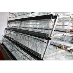 兖州阶梯式肉鸡笼-禽翔笼具养殖设备-阶梯式肉鸡笼厂家图片