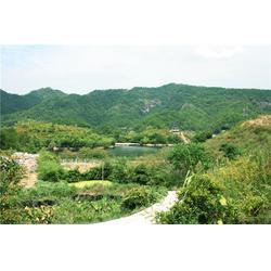 宏峰猕猴桃有口皆碑-红心猕猴桃-贵州红心猕猴桃图片