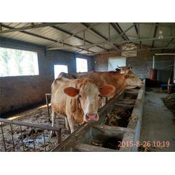 肉牛养殖场_天时养殖(在线咨询)_肉牛图片