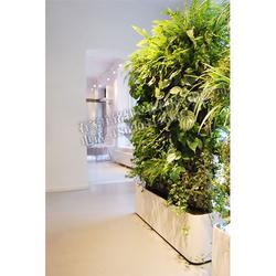 家居植物墙、铭秀立体(在线咨询)、植物墙图片
