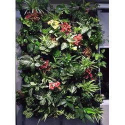 植物墙厂家-铭秀立体(在线咨询)石家庄植物墙图片