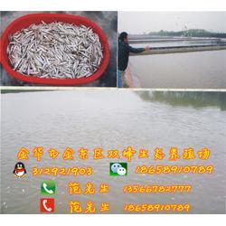 生态甲鱼、双峰生态甲鱼联系方式(优质商家)、生态甲鱼的养殖图片