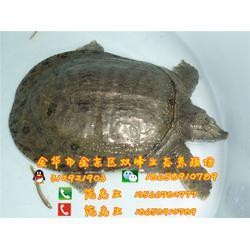 上海生态甲鱼、双峰生态甲鱼诚信经营、生态甲鱼营养价值图片