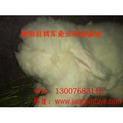 兔毛论坛-将军兔业长毛兔(在线咨询)长毛兔图片