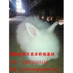 优质长毛兔、将军兔业长毛兔(在线咨询)、长毛兔图片