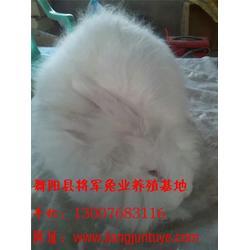 将军兔业(图)、长毛兔兔毛、长毛兔图片