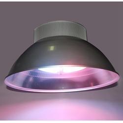无极灯植物灯有用吗|xpes星普(在线咨询)|无极灯植物灯图片